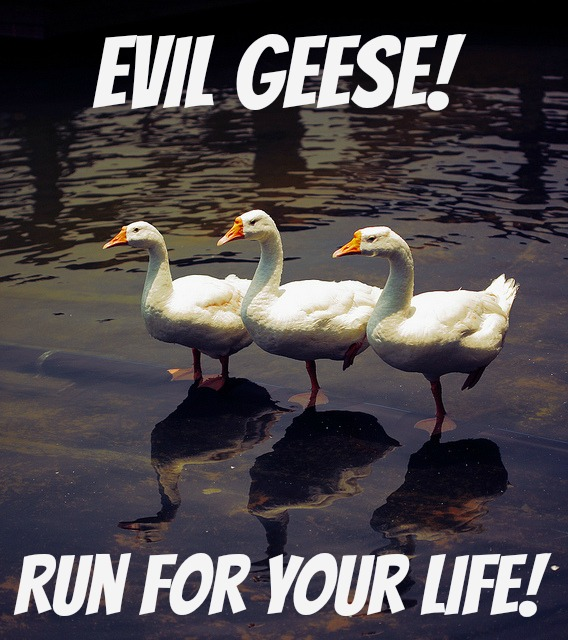 evil geese